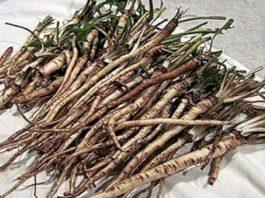 В сто раз эффективнее химиотерапии: трава, которая убивает раковые клетки в течение 48 часов!