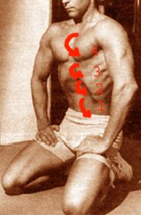"""Результат пошуку зображень за запитом """"диафрагмально-висцеральная гимнастика"""""""