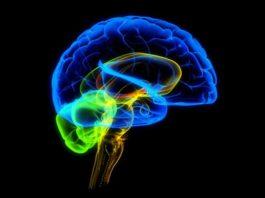 10 пагубных привычек, которые убивают твой мозг