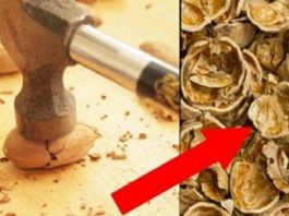 Я больше никогда не выбрасываю ореховую скорлупу. Тайна, которую стоит знать!